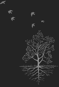 Tree_of_Paradise